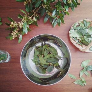 Bay leaf bundle FREE